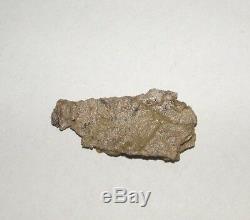 Peau De Dinosaure Dents Dent Dinosaure Fossile Époque Trex Réel Coa Dans La Vitrine